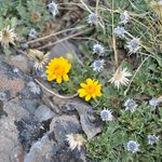 #flowers #wildlife #ecosistema #biology #montañas #mountain #trekking #Argentina https://t.co/06fwI8gAuC