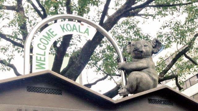 test ツイッターメディア - 1月26日火曜日。名古屋の天気は晴れ 今日は #オーストラリアの日 🇭🇲  オーストラリアといえば、名古屋の東山動物園でも人気のコアラ。コロナが過ぎたら会いに行きたいですね  #企業公式が毎朝地元の天気を言い合う https://t.co/Zthaec7ifv