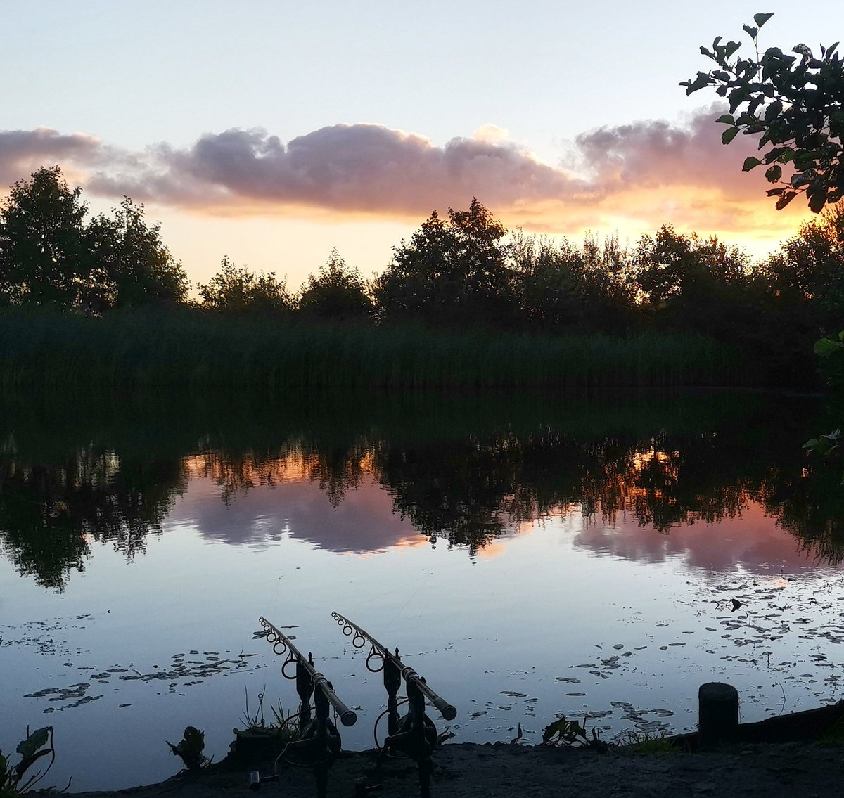 Carp fishing last <b>Summer</b>, sunrise on a lake can be magical 😍  #carpfishing #sunrise #fishi