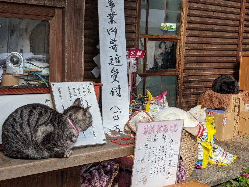 test ツイッターメディア - 梅宮大社へ行ってきた② 猫がいっぱい🐱撫でさせてくれる猫もいます 可愛すぎ❤️近所やったら毎日通うのに😌注意書きは守りましょう! 神社のお酒を買ったら「京の酒」の見慣れた箱 佐々木酒造さんやん 素敵な和紙のラベルに聚楽第 いつもは古都とまるたけですが、今日は梅宮大社の聚楽第いただきます🍶 https://t.co/S45TGYW8jp