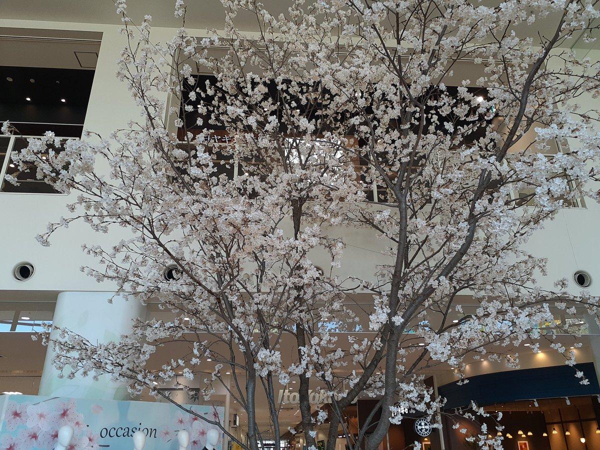 test ツイッターメディア - アリオ橋本の桜は満開だった。 https://t.co/ukjE6zZMIO