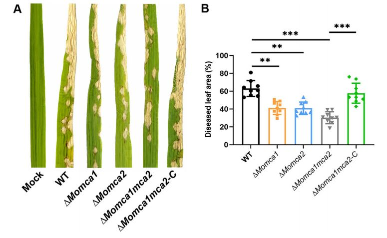 test Twitter Media - Role of Two Metacaspases in Development and Pathogenicity of the Rice Blast Fungus Magnaporthe oryzae https://t.co/seeDS8SnIG https://t.co/n0v7NlHWj8