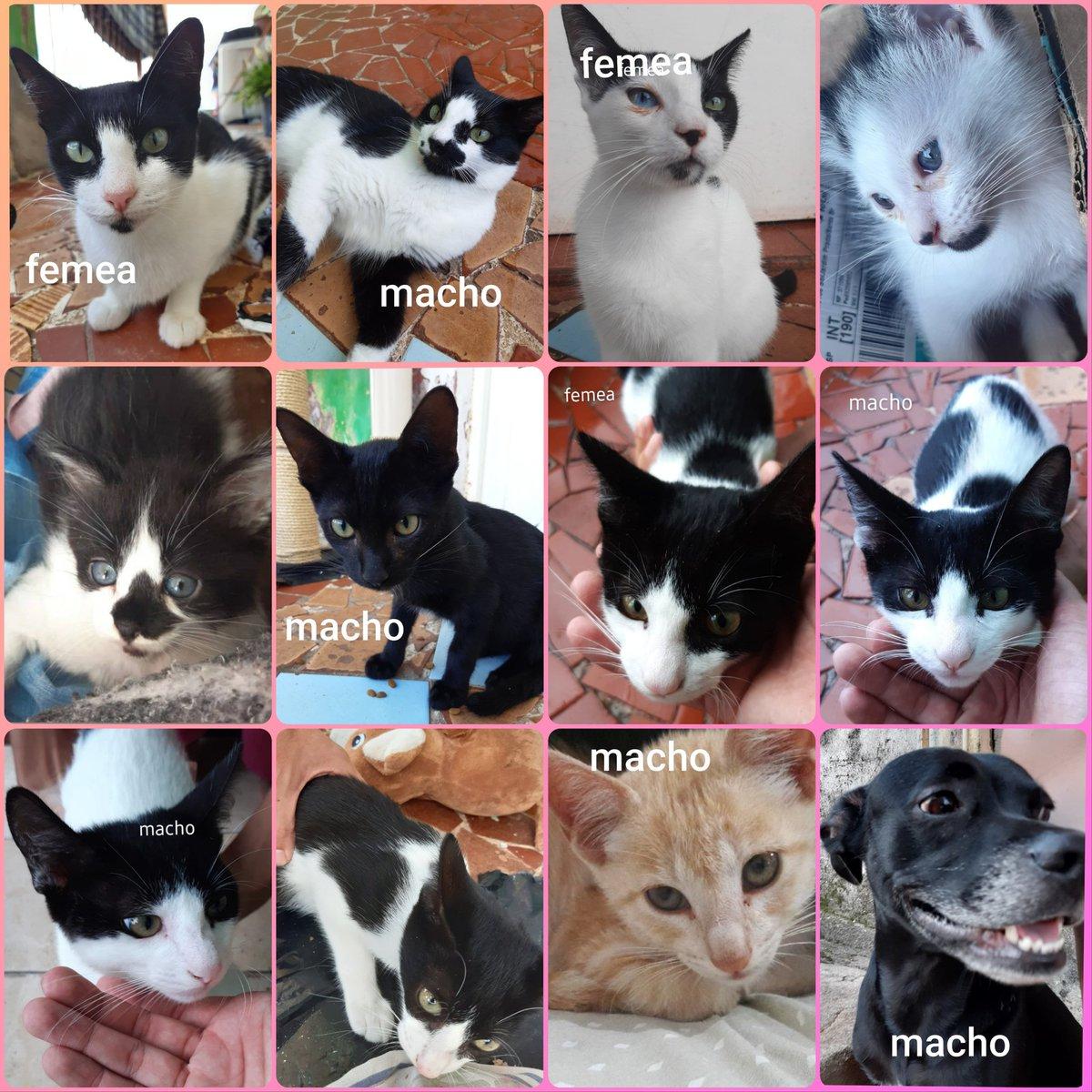Preciso da ajuda de vcs p/ castrar esses pets resgatados q estão sob meus cuidados pra dpois poder doá-los  Já temos 12 vacinas garantidas São 12 gatos e 1 cachorro  Valor total: R$1,200.00  Vcs podem ajudar fazendo uma doação a partir de R$1 ou dando RT 💜  Obrigado 🐶😺