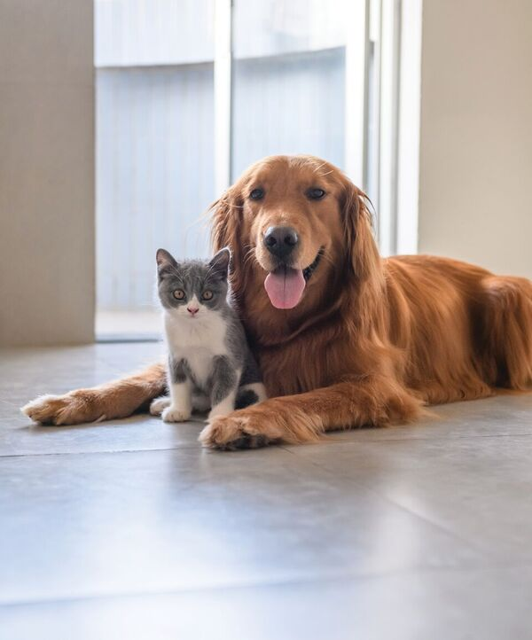 Show your dog or cat a little extra love today!   A big thanks to all our members who are working hard to improve dog and cat welfare today and every day!  #LoveYourPetDay 💙💛🐶🐱 https://t.co/2QF8vSTM5o