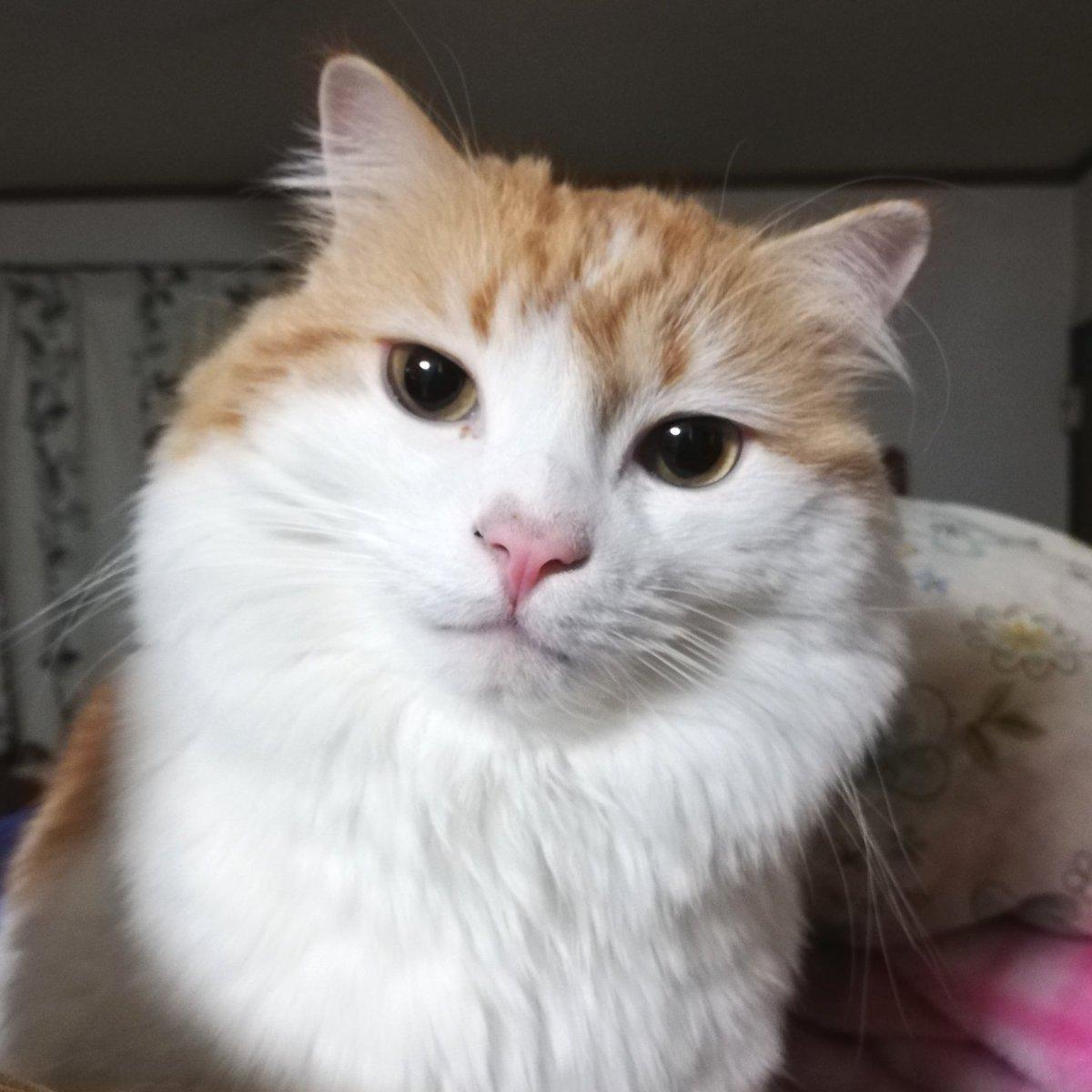 test ツイッターメディア - #猫の日   我が家の愛猫ロンくんです🐈 とても可愛い。  3.4枚目はこの間注文した越乃雪本舗大和屋さまの琥珀糖です🐈 かわいすぎました…🤦♀️こんな絵が描きたい。 (写真技術が無なので公式hpの画像です) https://t.co/Wv2fodSfK7