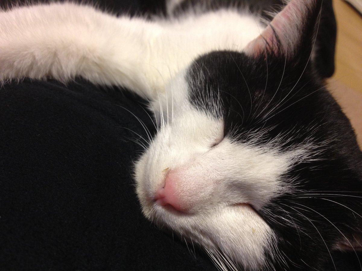 test ツイッターメディア - ぺぺの知り合いから送られたきた保護ねこさんだった子の画像。わずか一ヶ月で飼い主さんの背中の上で寝るように...  保護ねこを家族に迎えたい、見てみたい、という方は、ミグノンさんのサイトに訪れていただくか、「地元名 保護ねこ」で検索してみてください。https://t.co/CJHTceV0AJ    #猫の日 https://t.co/nfRy9Szb34