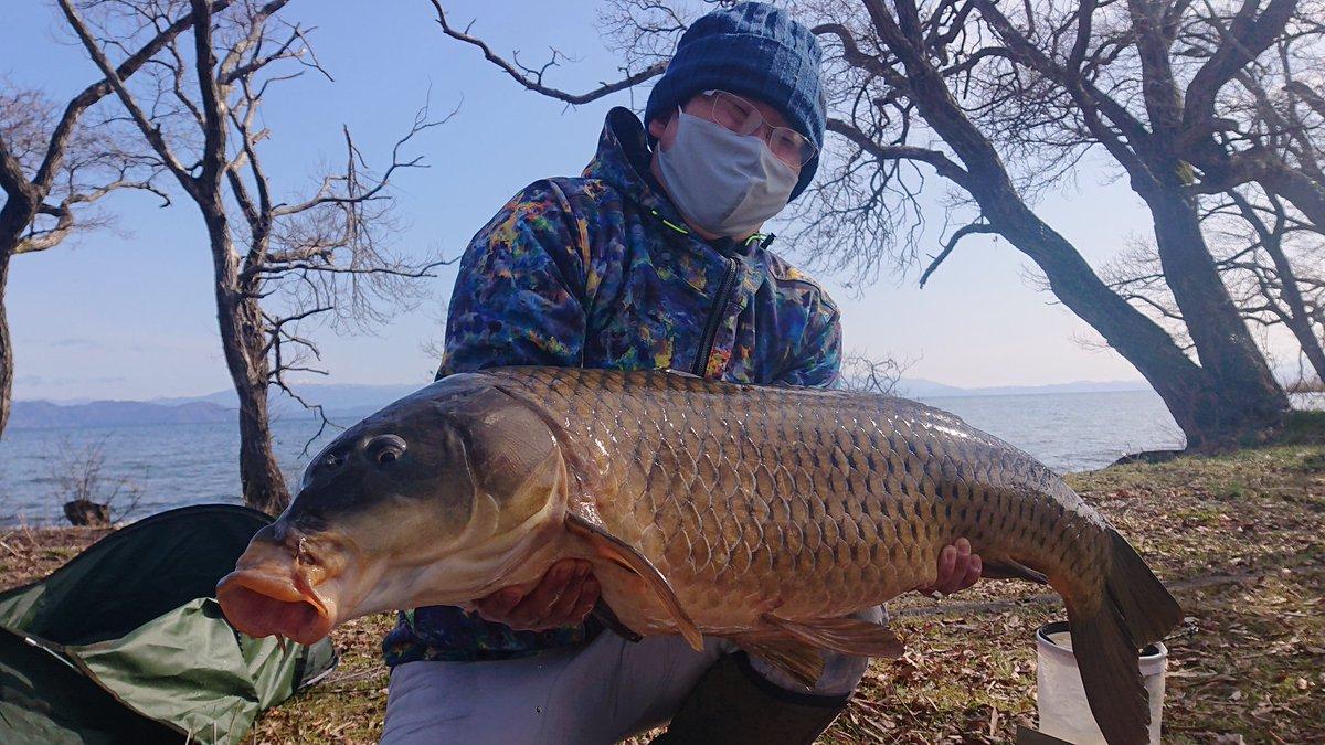 淡水魚自己新記録の100.5cmの巨鯉、釣ったどぉーーー!! #カープフィッシ�