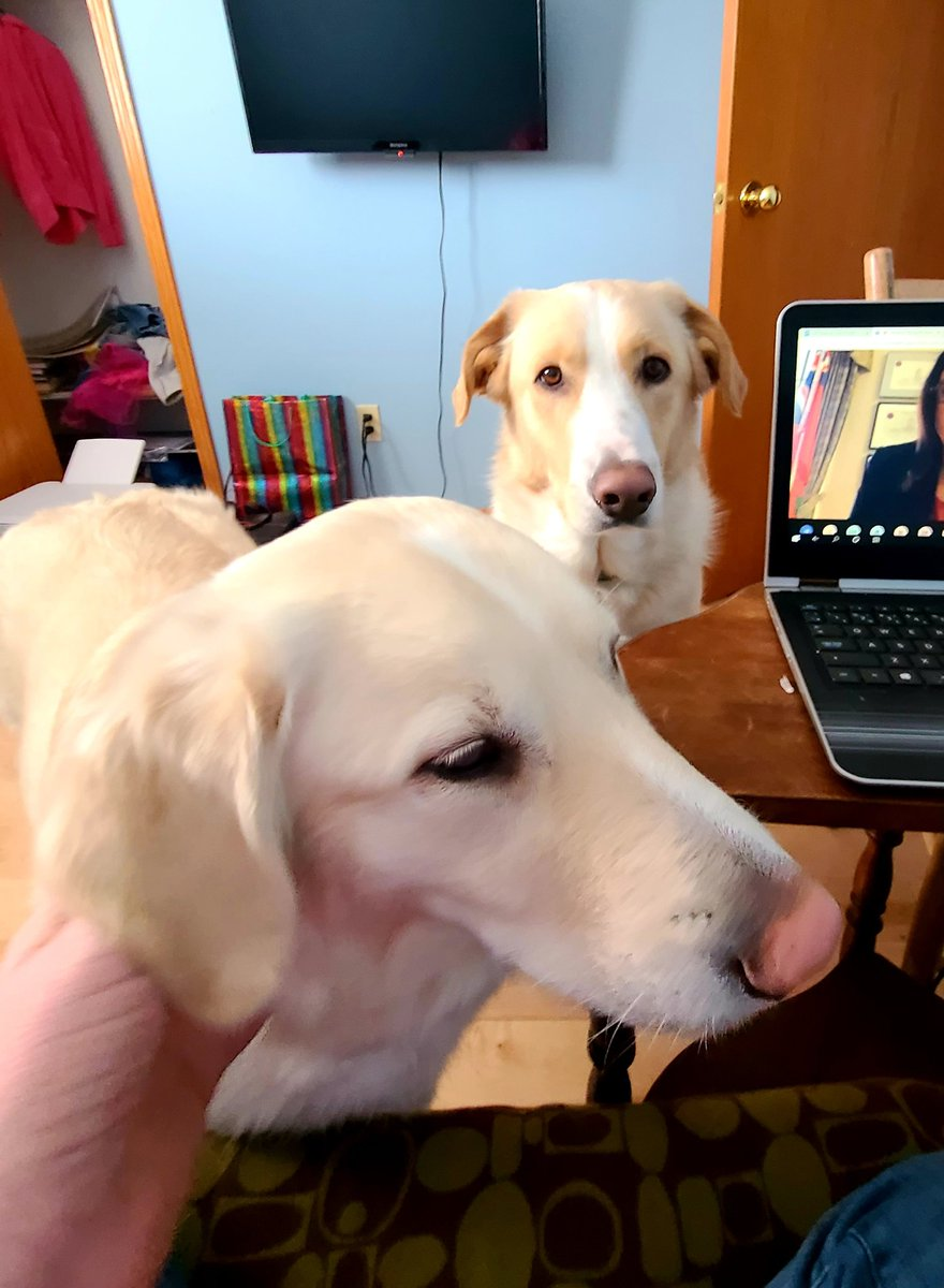 test Twitter Media - To be honest, I don't mind the interruptions to my zoom mtgs #dogslife https://t.co/Pluku03K5x