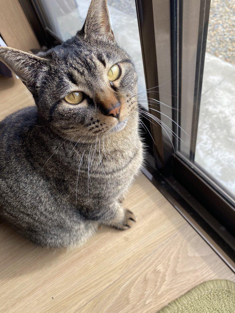 test ツイッターメディア - @KAZABANA9 とんねるずと仮面ライダーが好きなものでうっかり付けたハンドルネームです。 猫は預かり猫なので名前知らないです。 うちの猫は桐山漣といいます。 アイコンの猫は奥山福太郎です。 https://t.co/DAXk5zyMwf