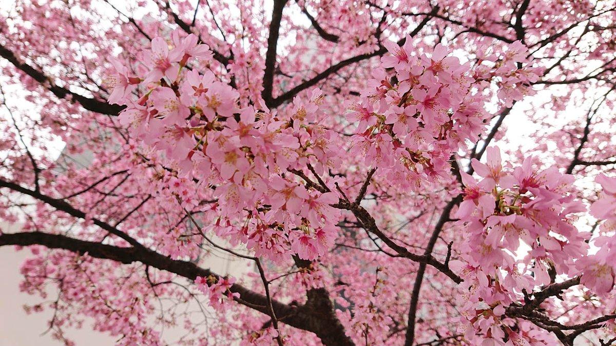 test ツイッターメディア - 2021年2月26日QP購入分(第571回目) 今日の購入マークシートはE。 今日は少しお出かけする用事があったのでもう花開いている桜を見ながら移動。(江戸彼岸か河津桜だと思う🌸)  帰り際、治一郎でカットのバウムクーヘンを購入して帰宅デス♬(ホールは少し重いので、3/1以降に改めて…)  #ロト6 https://t.co/cve62oc4uA