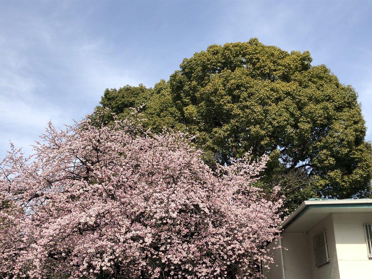 test ツイッターメディア - 上野公園入口の桜が咲いてた 沢山の人が撮影している中でクソジジイが若い女の子をナンパしていた 上野はナンパスポットなんよね 一昨年? なぜか若い男にナンパされてドン引き ナンパされても何の得もない (森山未來君なら可) https://t.co/79nJuJYB5M