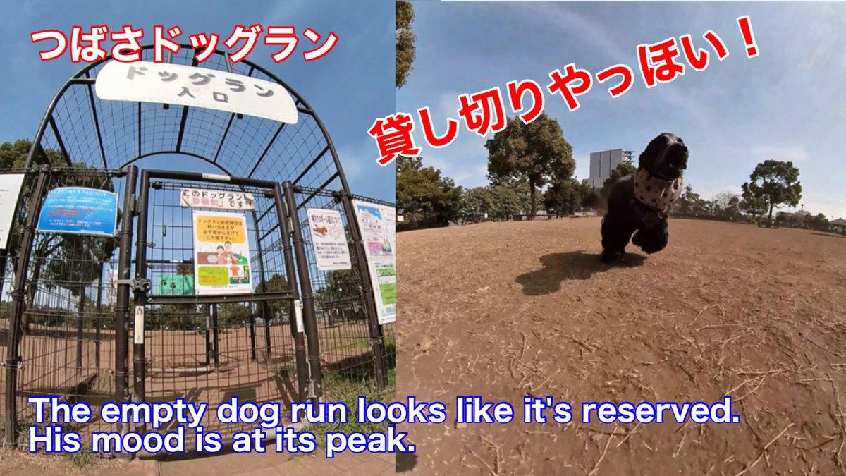 test ツイッターメディア - 貸切やっほい。自由なちよ君かわいい。 #イングリッシュコッカースパニエル #犬 #イッヌ #dog #城南島海浜公園 【つばさドッグラン】ドッグランが貸切状態ではしゃぐイングリッシュコッカースパニエル【ちよ君】癒し https://t.co/o7ch3u30j9 via @YouTube https://t.co/CQbRIQvJU3