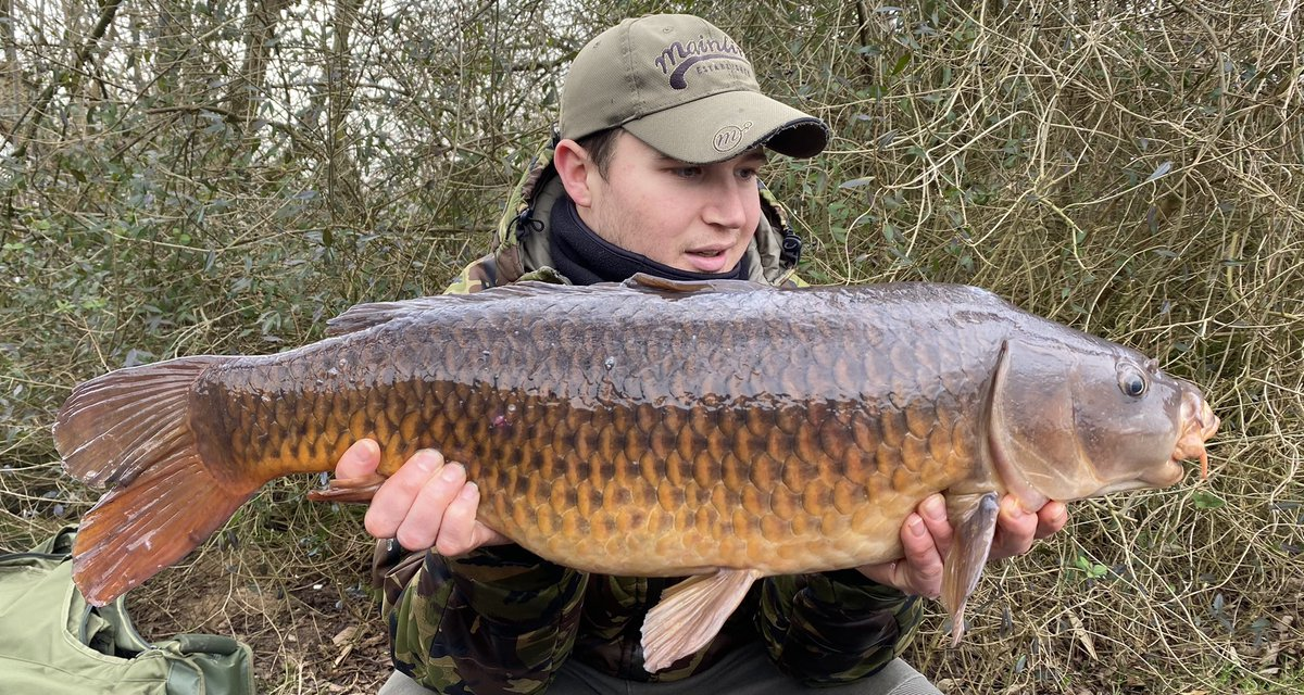 Couple of commons from a recent short session caught with @MainlineBaits #cell #commons #carpfishing