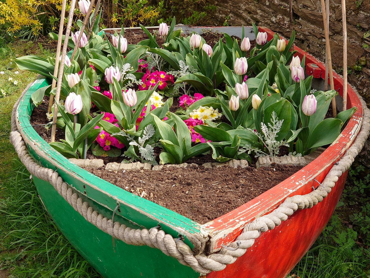 test Twitter Media - T U L I P S Nice to see old wooden boats, that would otherwise have been destroyed, re-used as flower beds.   #VisitDevon #LoveDevon #ExploreDevon #SWIsBest #NewtonFerrers #Tulips https://t.co/F8b5QuqojH