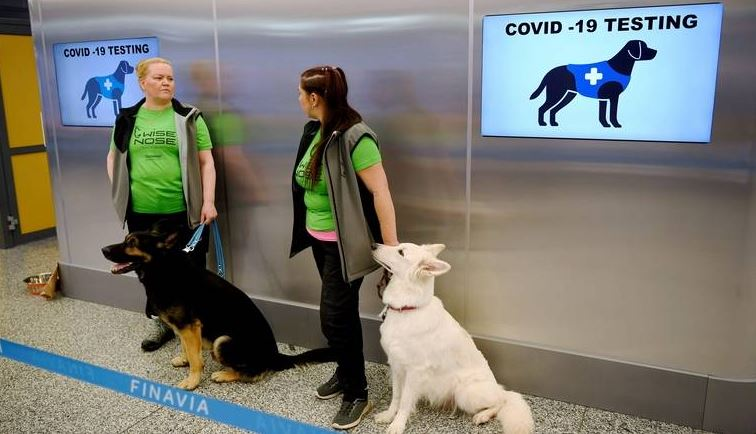 COVID-19: Madeira to use sniffer dogs  Madeira developing sniffer dog detection.  Press agency Lusa report that the government of Madeira is developing a project using sniffer dogs to detect people infected with SARS-CoV-2 at the airport.  The president of the Region,... https://t.co/xwHIcOXnEo