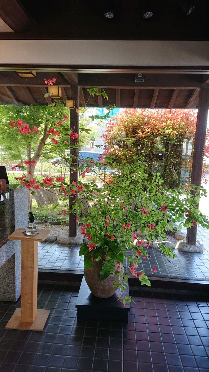 test ツイッターメディア - 今日の山田屋まんじゅうさん。  まろぶが、普通に並んでいるのが嬉しいです。ご好評だったので、とお店のかたもニコニコ。山の方の赤い躑躅と名前のわからないお花。綺麗でした。 https://t.co/7HPlXs5Vkd