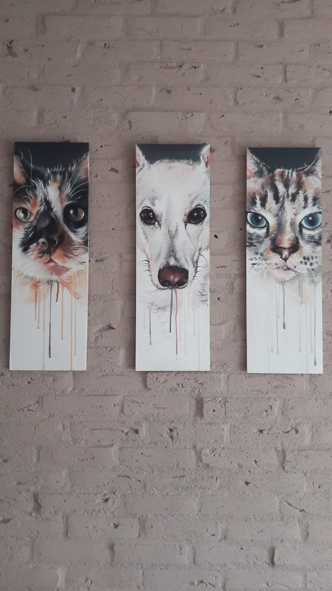 test Twitter Media - Mijn mooie dames op canvas.. van links naar rechts bindhi (maincoon 13jr) abey (witte herder 5jr) katla (europese boskat 10jr) https://t.co/EvTyfN0FrX
