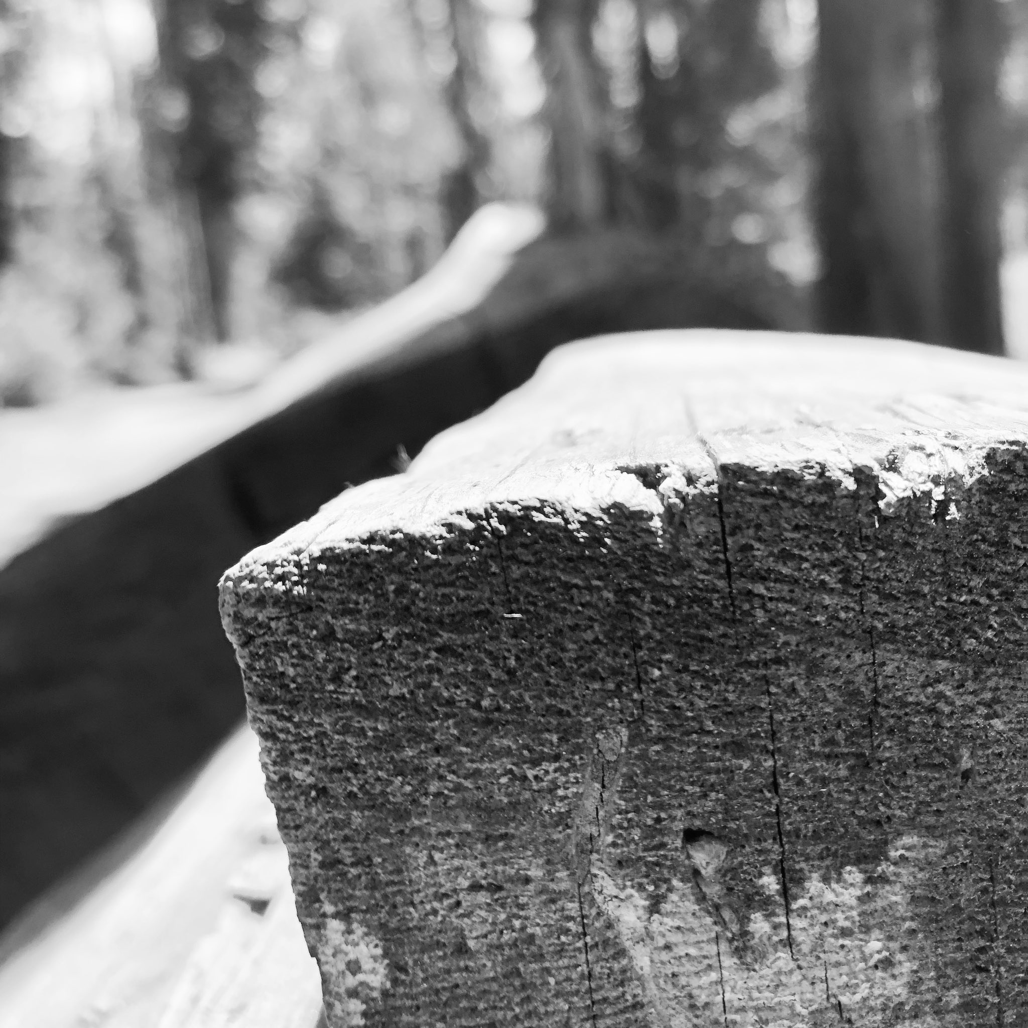 """""""Jesus was made known to them in the breaking of bread.""""  ~ John 24:35  Google Photos labeled this pic as """"bread"""" even though it's wood in Yosemite taken during our trip there. Turns out that combination  fits well into the theme of Easter and the Cross. #gospel #todaysreadings https://t.co/tHsiPiZCdP"""