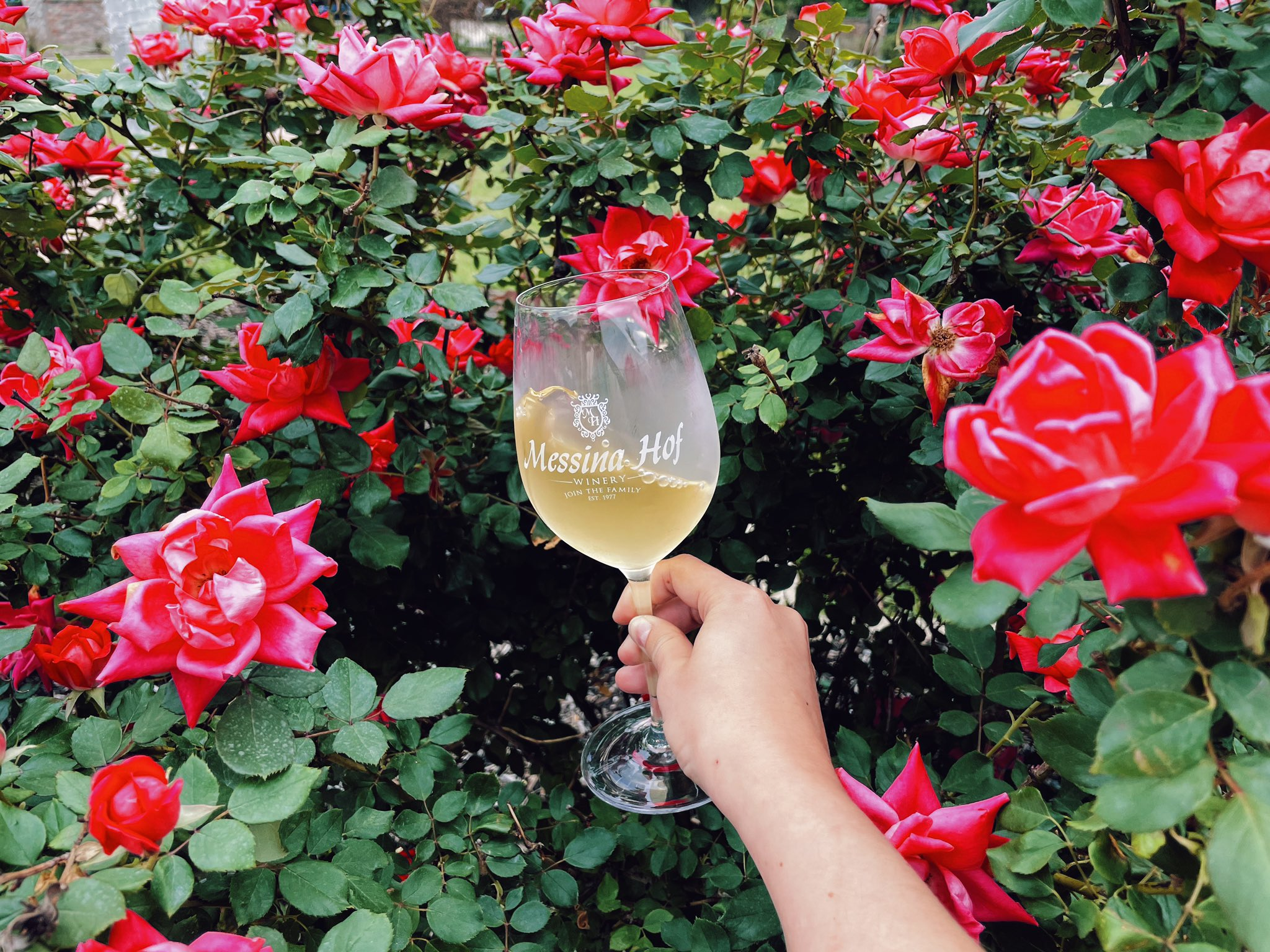 TEXAS: WINE, FOOD, ART, FLOWERS & SCIENCE:  THE GOOD THINGS IN LIFE cover image