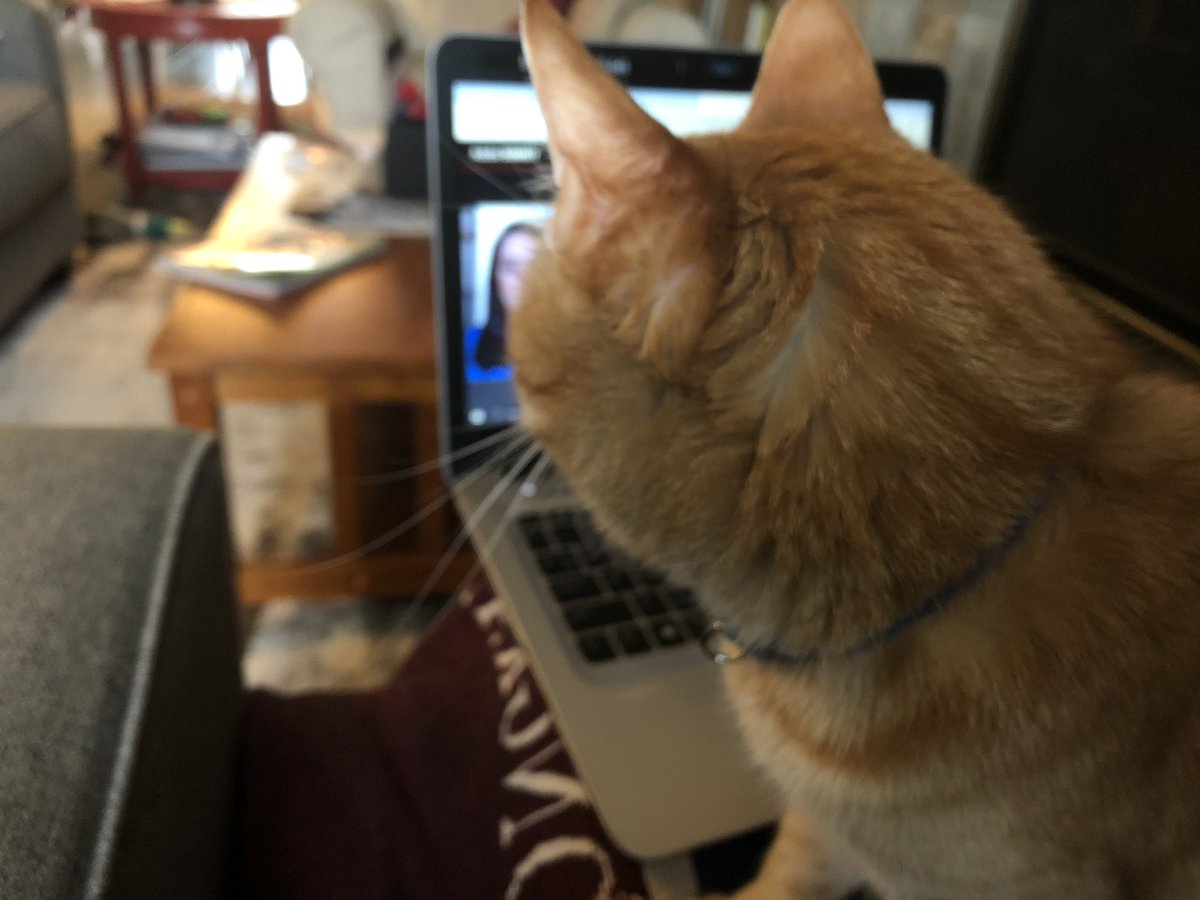 kfoutz: Hey, down in front! #conferencecat #wfh #AdobeSummit https://t.co/xJEYelEp1W