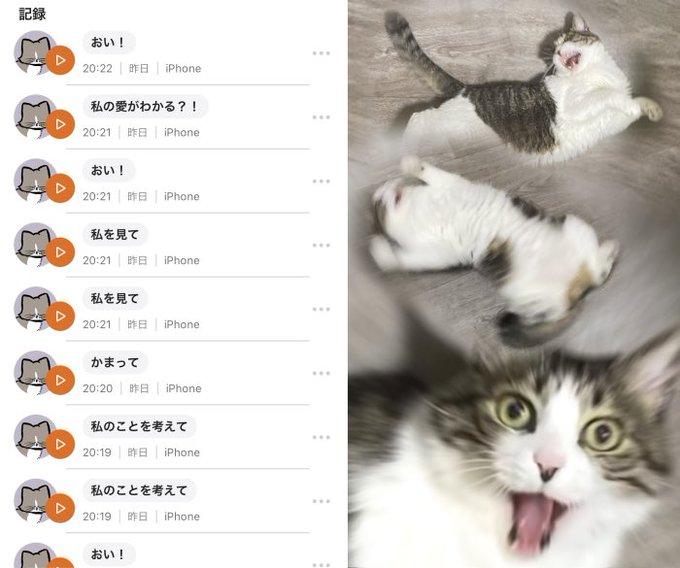 TsuyoshiWoodさんのツイート画像