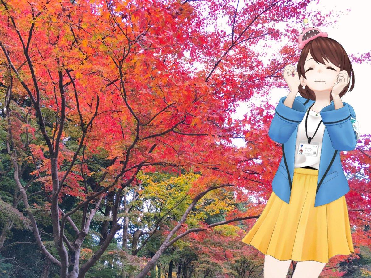 test ツイッターメディア - ひよりん@水戸偕楽園  偕楽園というと春先の梅が有名ですが、秋の紅葉も中々のものですよ🍁🍁🍁  #ひよりんといっしょ #茨ひより https://t.co/STj7oEFIDG
