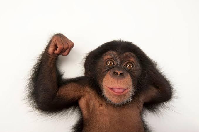 test ツイッターメディア - チンパンジー マンチカン 栗まんじゅう  健全な #チン凸 #マン凸 #クリマン凸  不健全な民たちよ、ひっかかるがいい https://t.co/XqAuM1Uh5D