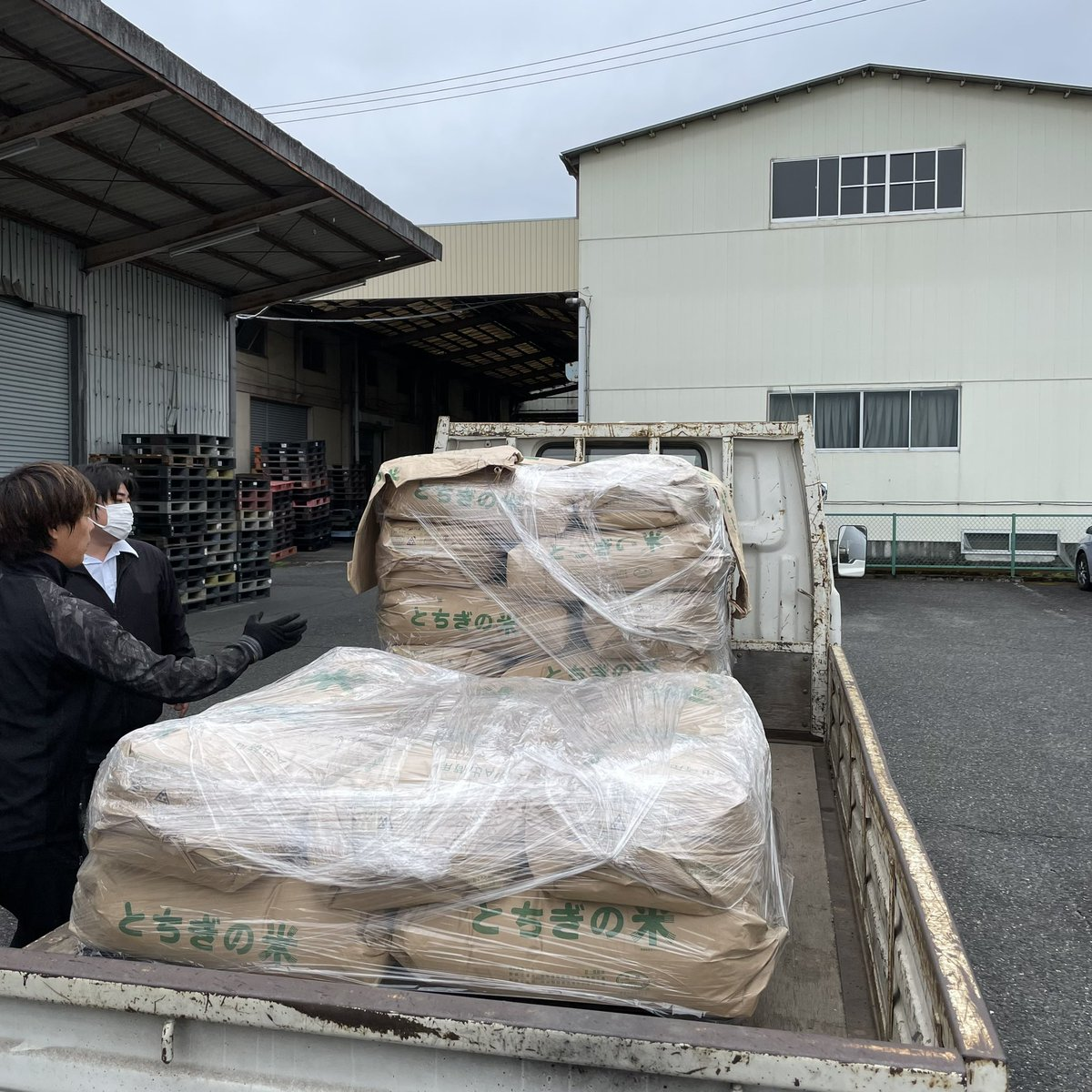 test ツイッターメディア - 【日本酒プロジェクト】 おはようございます!  本日は山田錦の納品で島崎酒造さんにきています☆ いよいよ醸造がはじまります(^^) https://t.co/9I98N7RCk3