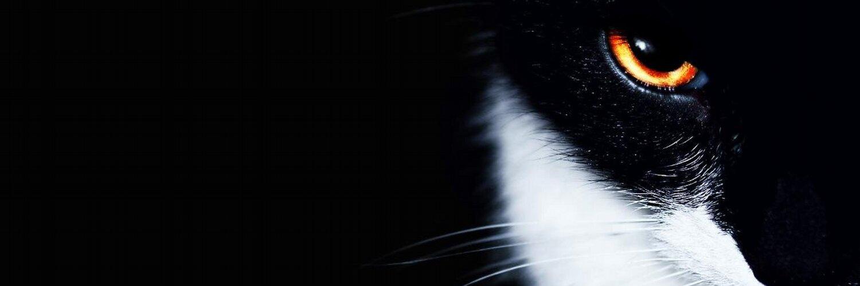 обои на рабочий стол черные кошки на черном фоне № 154882 бесплатно