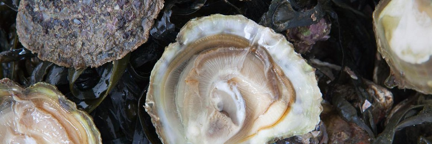 Scott's Where To Eat Oysters In London