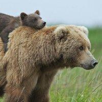 @flock_of_bears