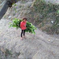 @Birendrasanjya1