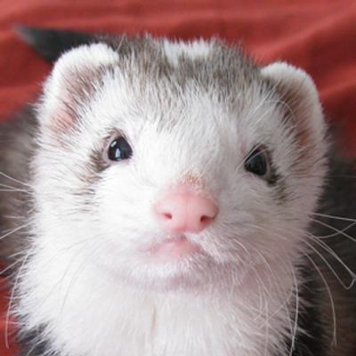 Snotface Ferret | Social Profile