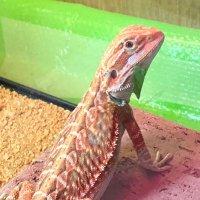 @Reptiles__1794