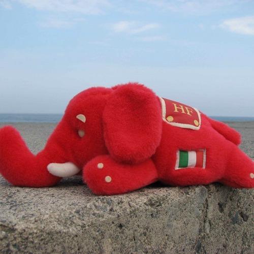 紅の象 Social Profile