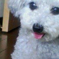 SHIKOKU Hikaru 四國 光   Social Profile