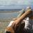 agave_amamiana