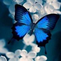 @ButterflyshopTA