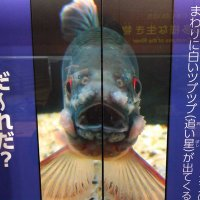 @oikawa88_fish