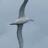 @albatross1960