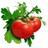 tomatota6