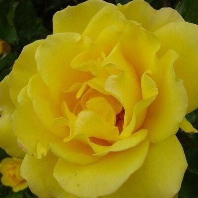 orangeflower08 | Social Profile