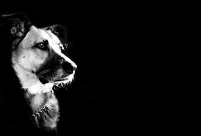 Sokak Hayvanları Social Profile