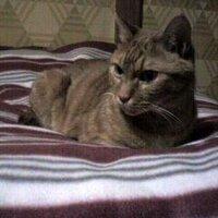 薄野の舞姫   Social Profile