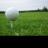 @GolfingUSA