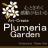 plumeria_garden