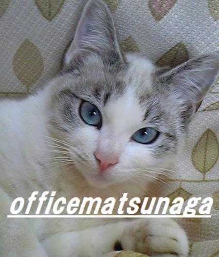 officematsunaga