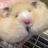 The profile image of matsukolook