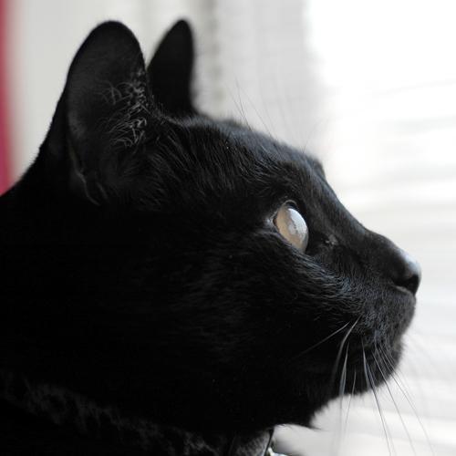 タニグー Social Profile