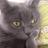 The profile image of zzzurdito